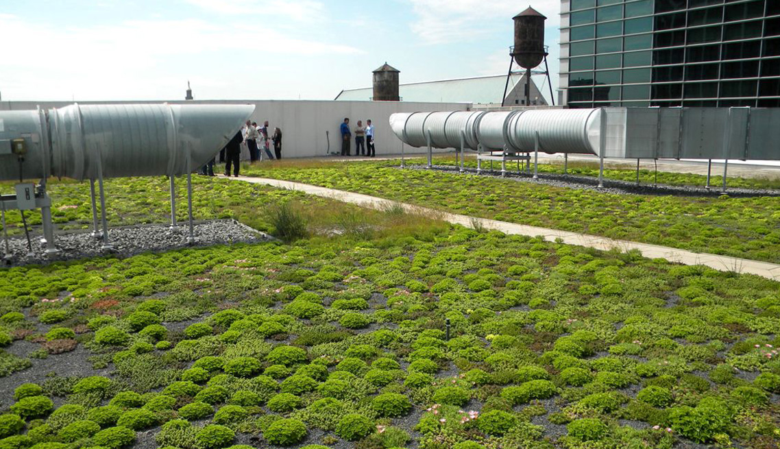 Sam Nunn Federal Building Vegetated Roof | Atlanta, Georgia